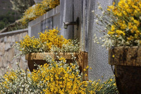 festival piorno en flor