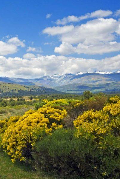 Sierra de Gredos en primavera