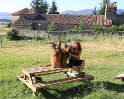 Casa rural que admite perros. Perro en la Casa del Altozano.