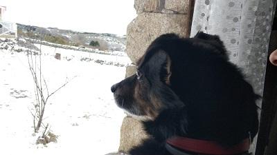 casa rural que admite perros. casa del altozano. Gredos.