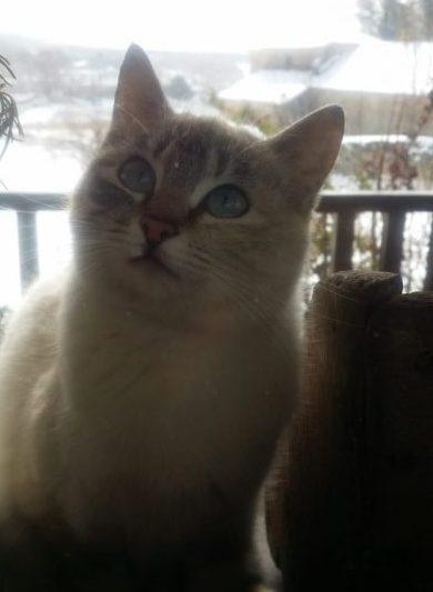 Casas rurales que admiten gatos