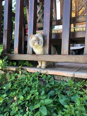 Casa rural que admite mascotas.