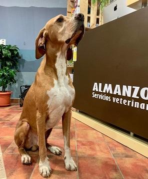 Almanzor, Clínica veterinaria de Navarredonda de Gredos. Gredos con perro.