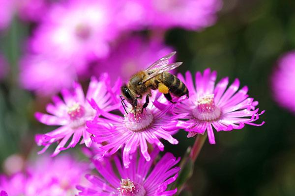 museo abejas en gredos