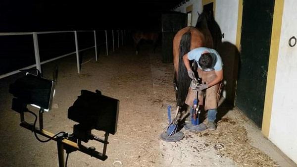 Herrando a un caballo en Gredos.