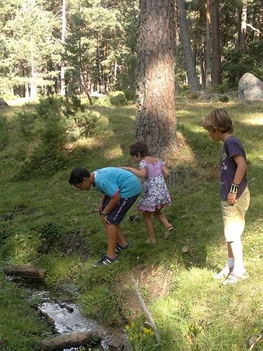 """Los niños disfrutan en el pinar de Navarredonda de Gredos, Ávila, buscando """"bichos""""."""