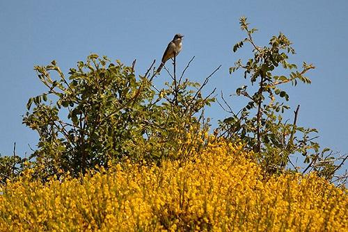 Turismo orinitologico. Gredos Norte. Foto: Hostal Almanzor.