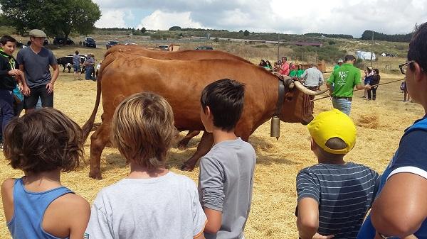 Gredos Norte - Fiesta de la Trilla