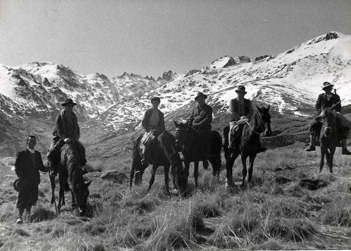 caballos en Gredos