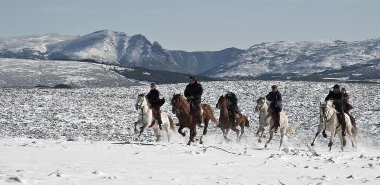 caballos en Gredos.