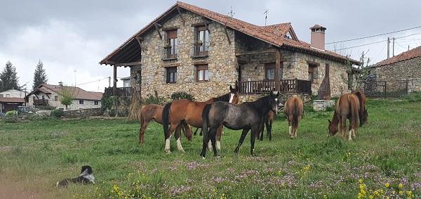 Caballos de la Yeguada Almanzor en La Casa del Altozano. Fotografía: Eva Veneros.