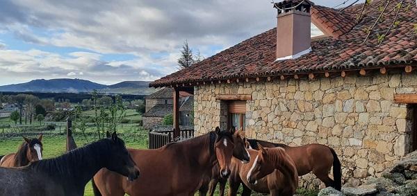 Caballos en Gredos. Casa del Altozano.