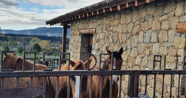 caballos en La Casa del Altozano, en Gredos