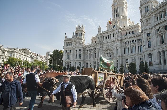 Fiesta de la Trashumancia. Madrid