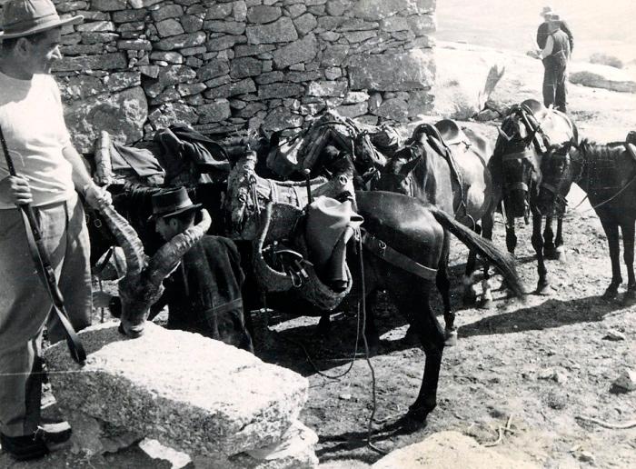 caza de machos monteses a mediados de siglo XX