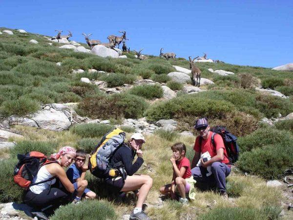 Grupo de machos monteses en Gredos