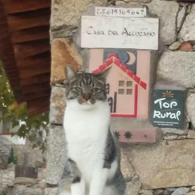 Nano, el gato de La Casa del Altozano, en Gredos. Ávila.
