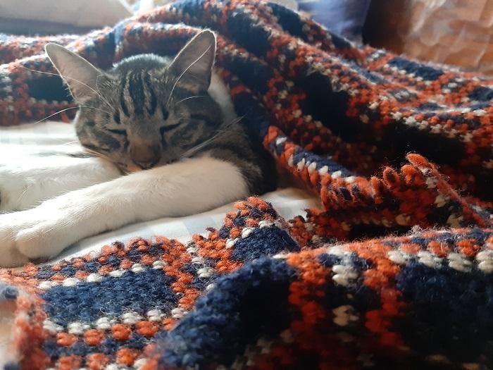 gato casero