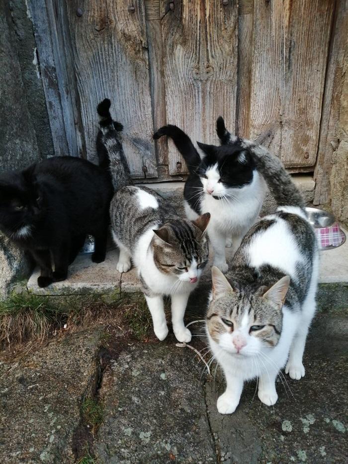 4 gatos de Hoyos del Collado