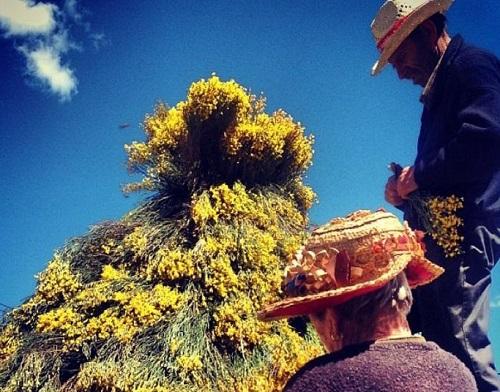 Lugareños preparando la decoración del Festival del Piorno en Flor.