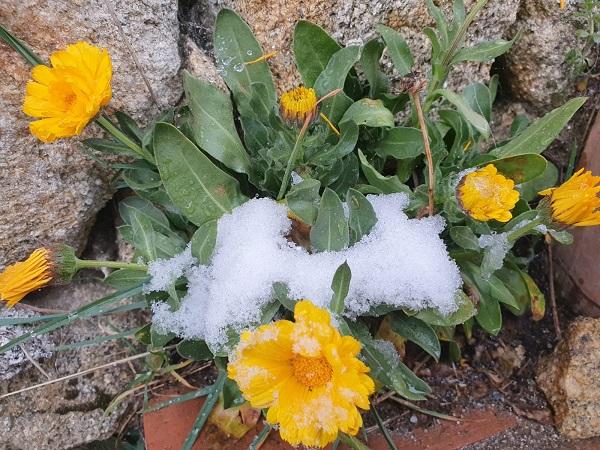 flor casa del altozano en gredos