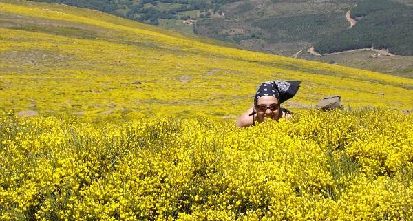 piorno en flor gredos