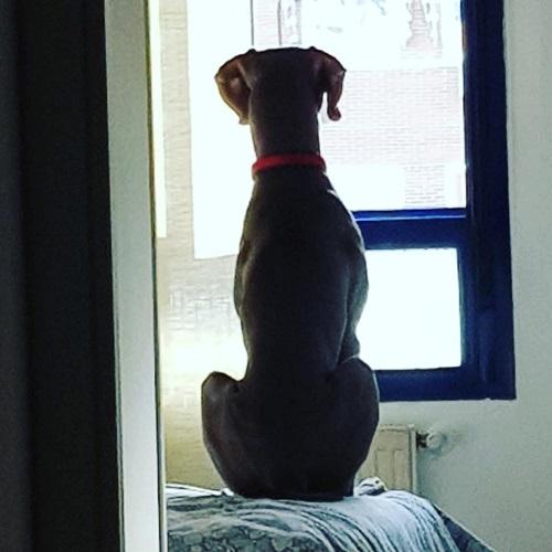 Gredos con Perro todo lo que necesitas saber